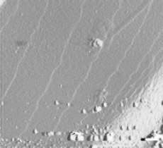 AFM image 10 µm x 10 µm of 0.3 nm terraces on Si