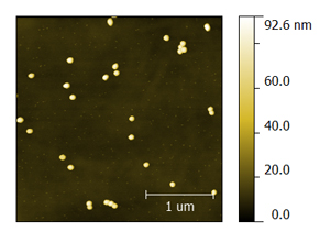 100-nm gold nanoparticles AFM scan