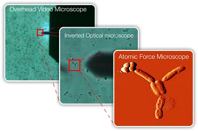 Optical, inverted, and AFM view of e. coli sample