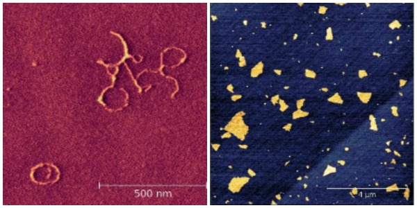 DNA and Graphene measured with TT-AFM